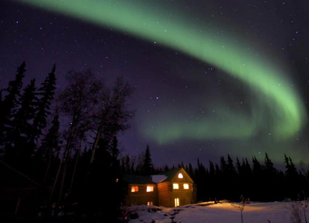 northern lights tour stars leader mauled by grizzly homemade cookies. Black Bedroom Furniture Sets. Home Design Ideas