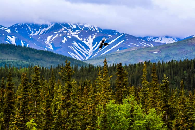 denali-national-park-002