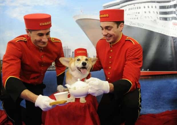 "Cunard hosts ""Doggy"" Tea Service at Westminster Kennel Club Dog Show"
